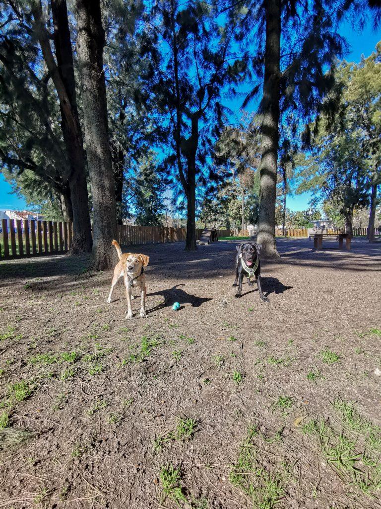 Lissabon mit Hund Hundewiese