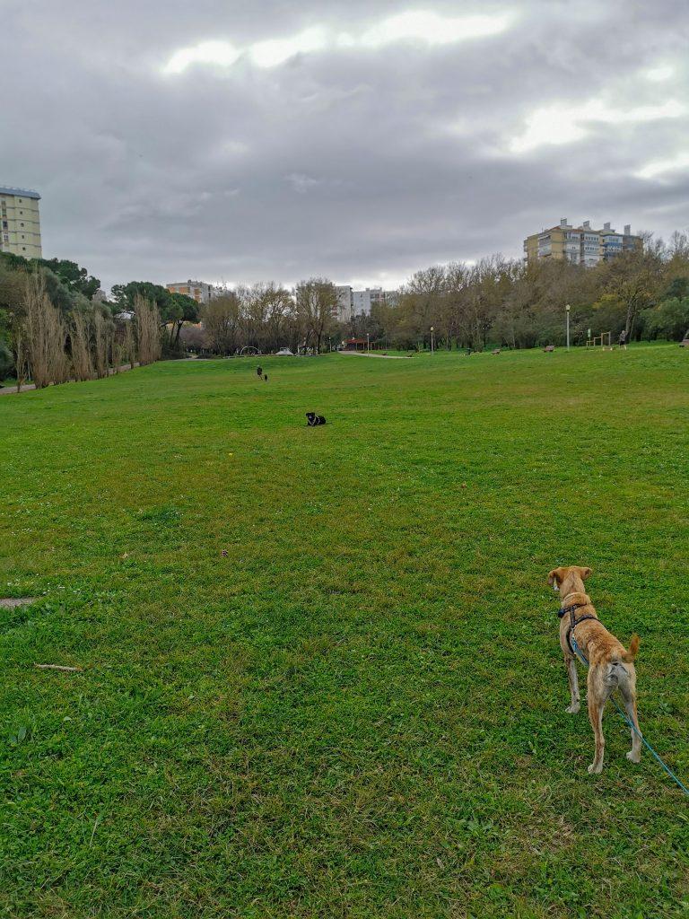 Lissabon mit Hund Park