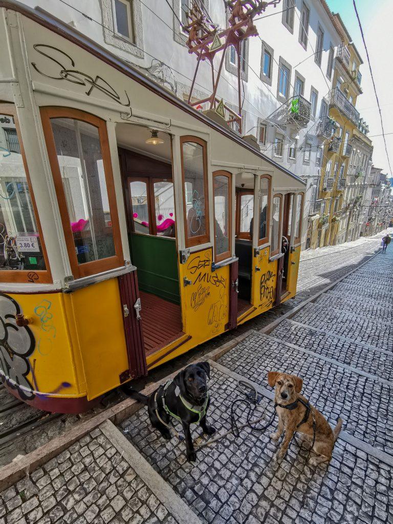 Lissabon mit Hund besuchen