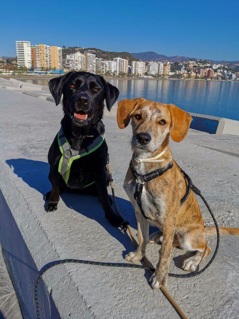 Malaga-mit Hunden