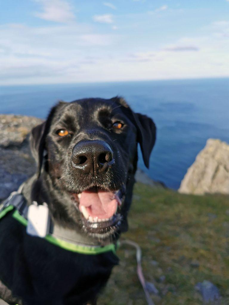 Nordkap mit Hund
