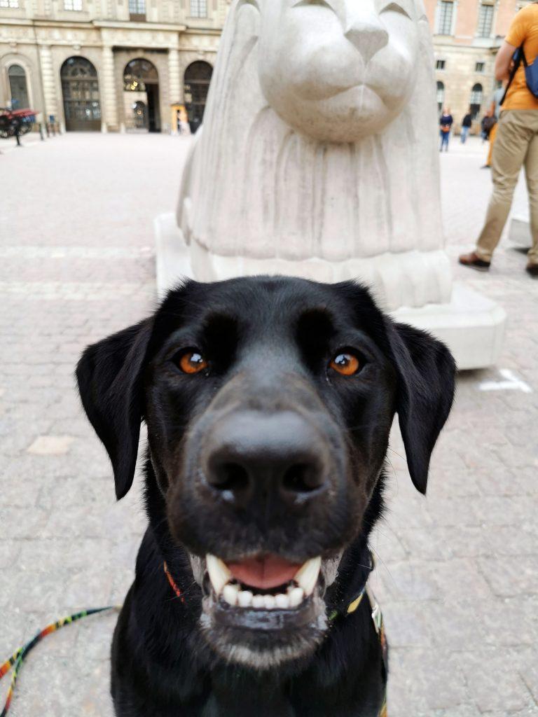 Palast in Stockholm mit Hund