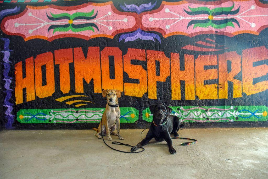 Panorâmico de Monsanto mit Hund