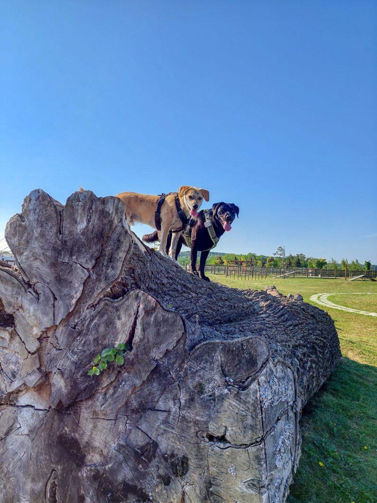 Paradies für Hunde