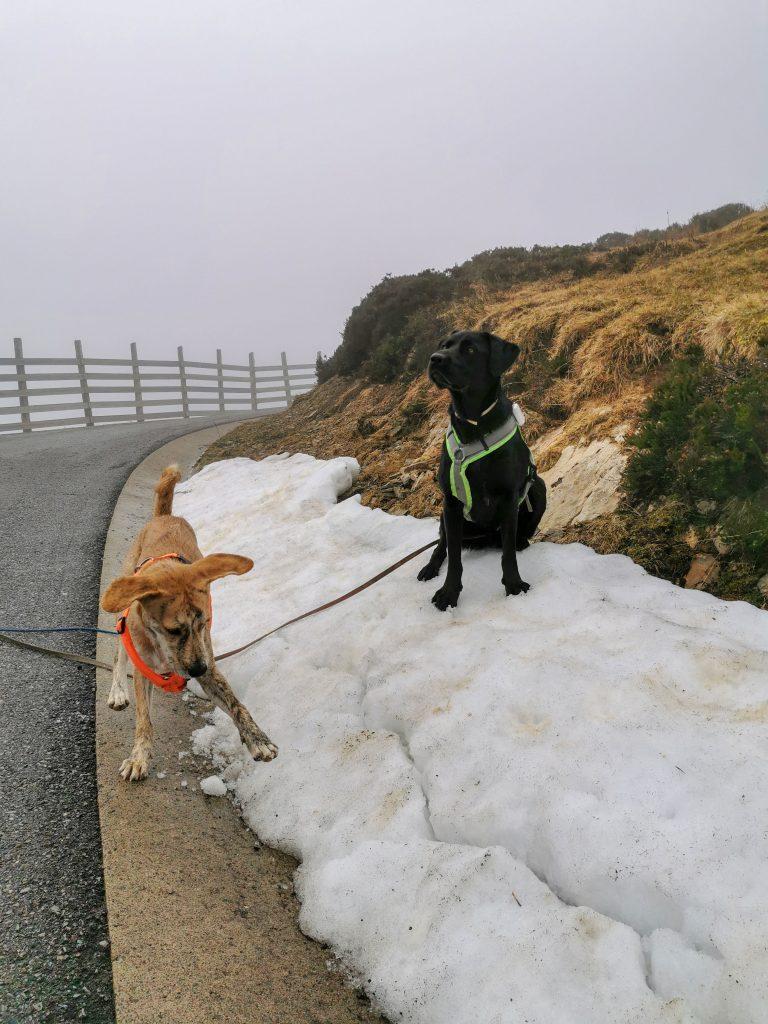 Pinos erster Schnee