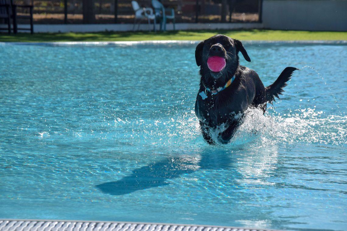 Wasserpark für Hunde