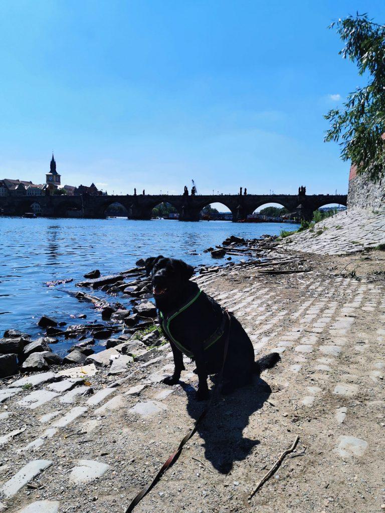 Prag mit Hund