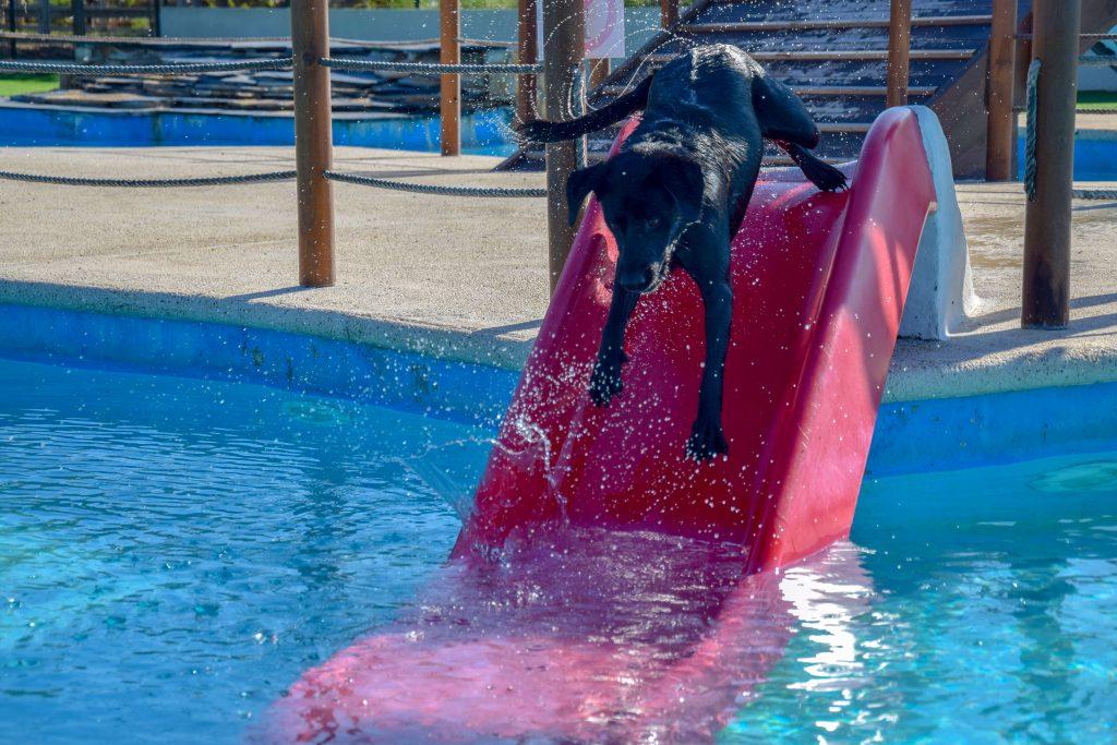 Rutsche im Wasserpark für Hunde