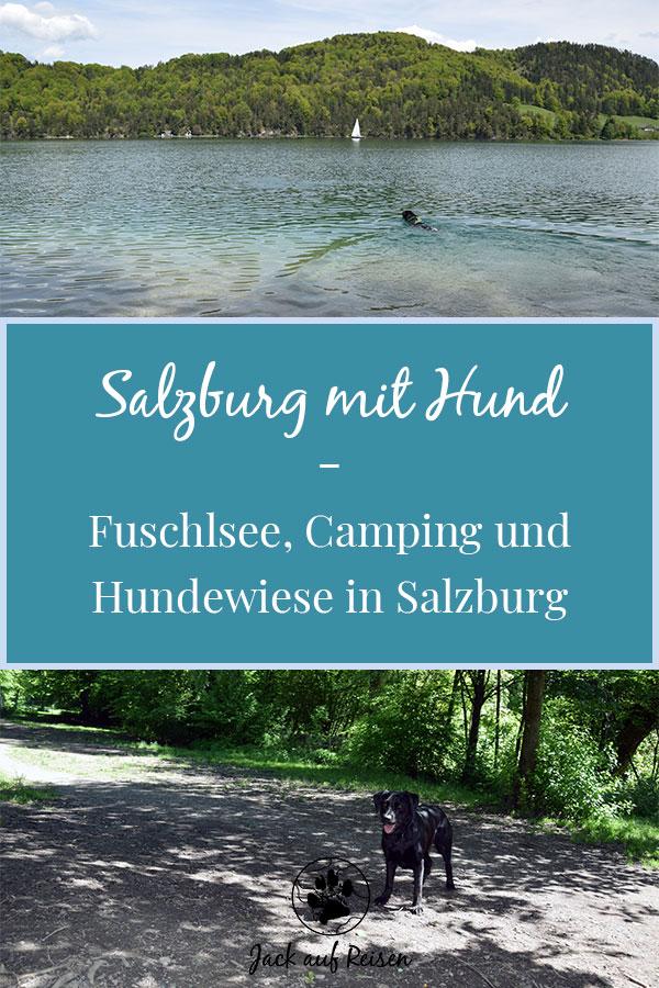 Salzburg mit Hund Pin