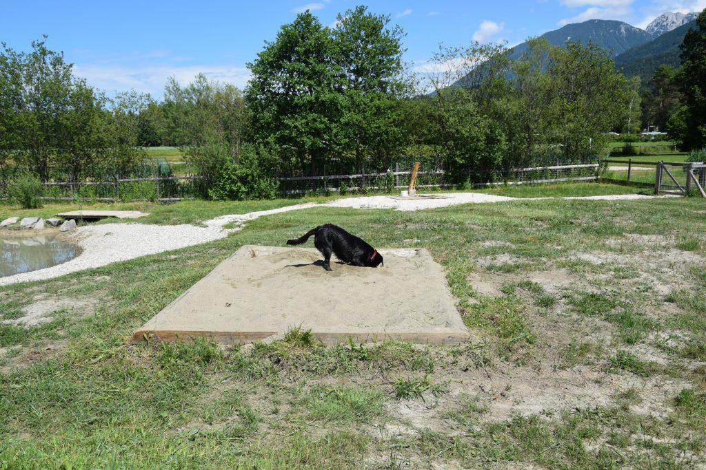 Sandkiste am Hundespielplatz