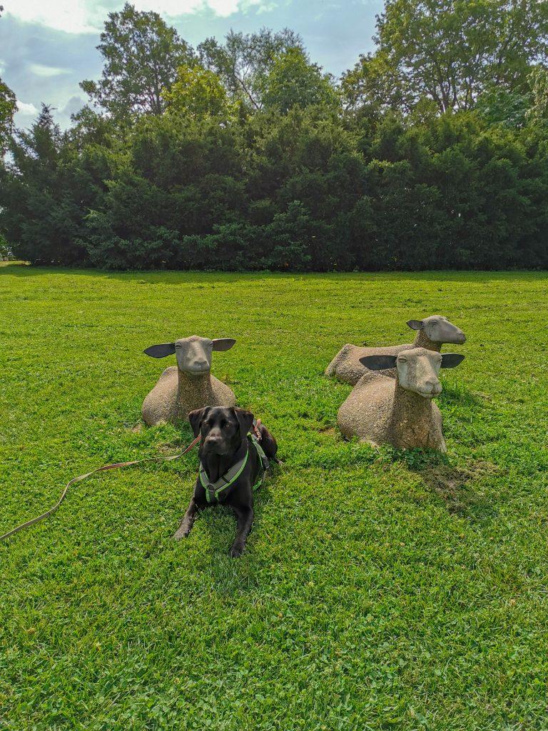 Schafskulpturen