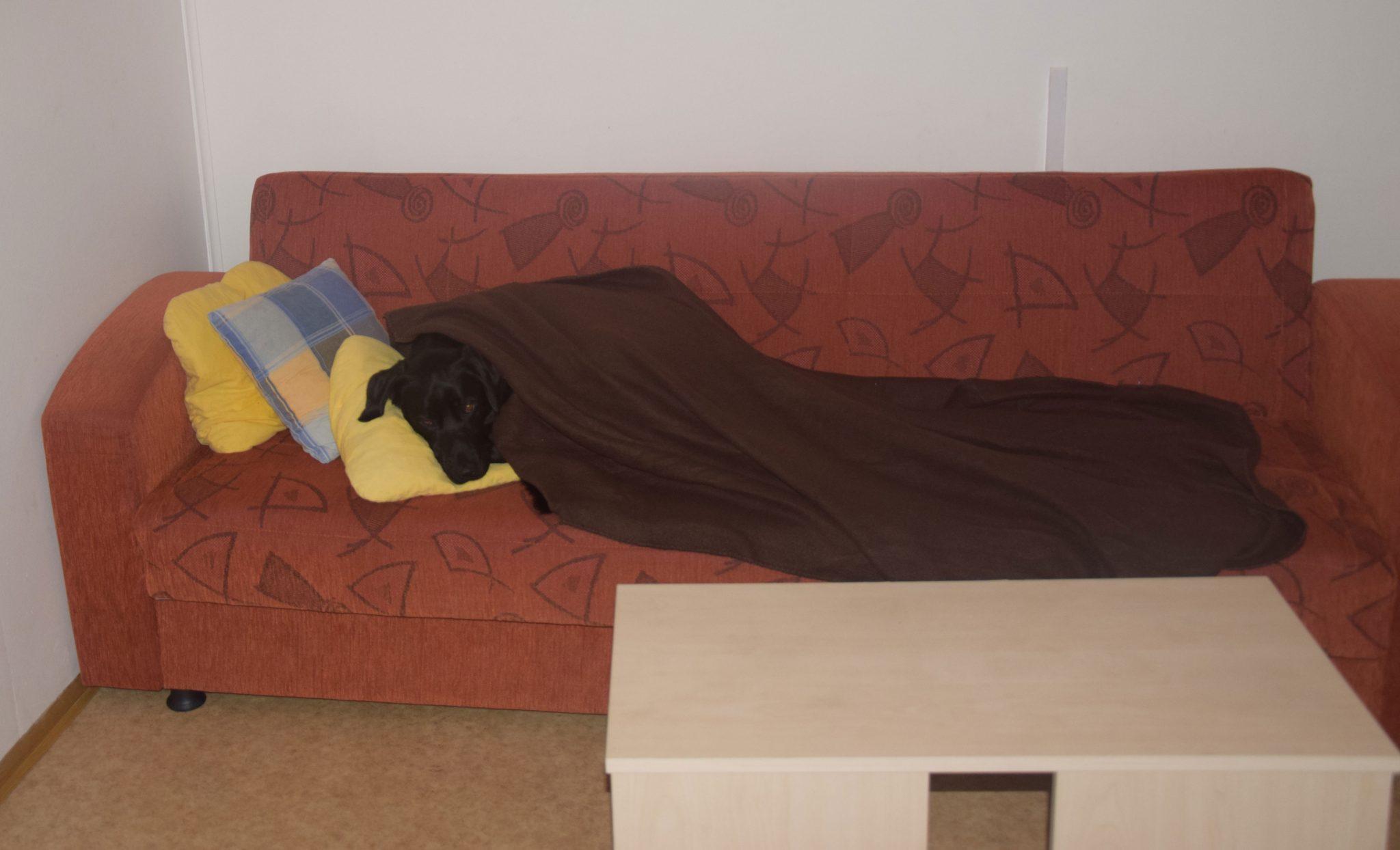 Schlafen im Wonzimmer der Hütte