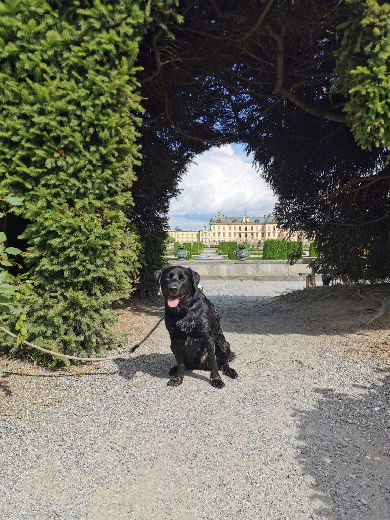 Schloss Drottningholm mit Hund
