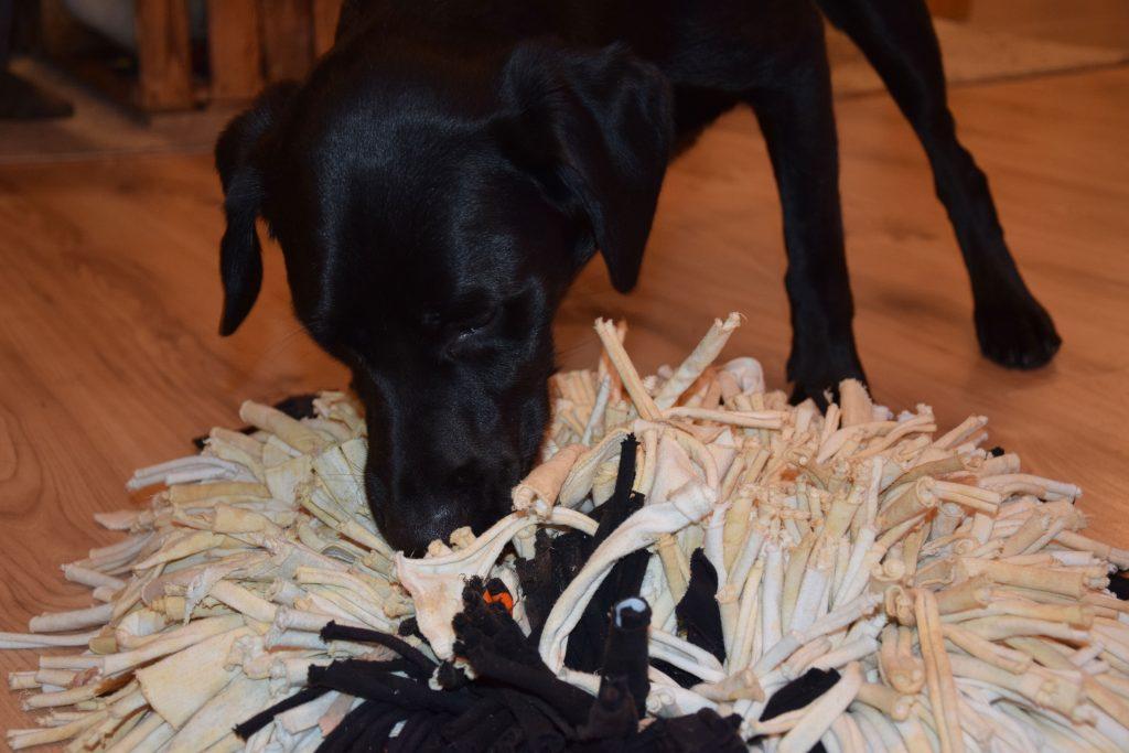 Schnüffelteppich Hund