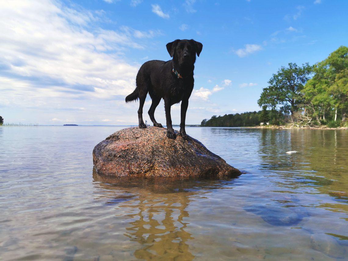Schweden mit Hund