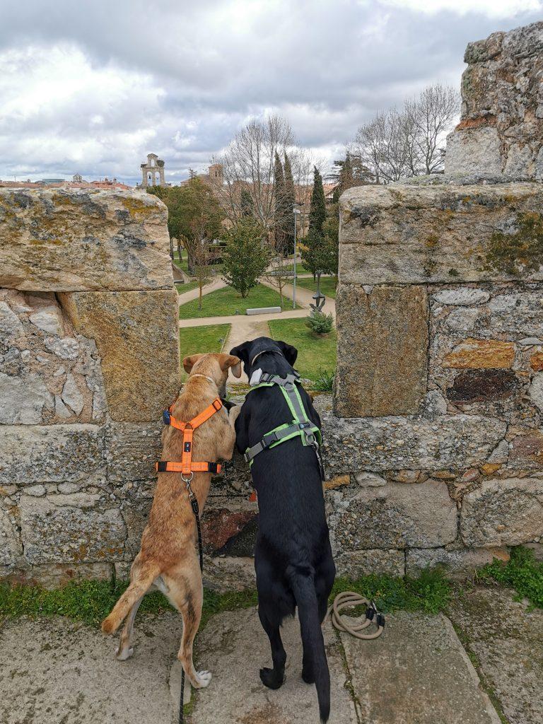 Sehenswürdigkeiten in Nordspanien mit Hund