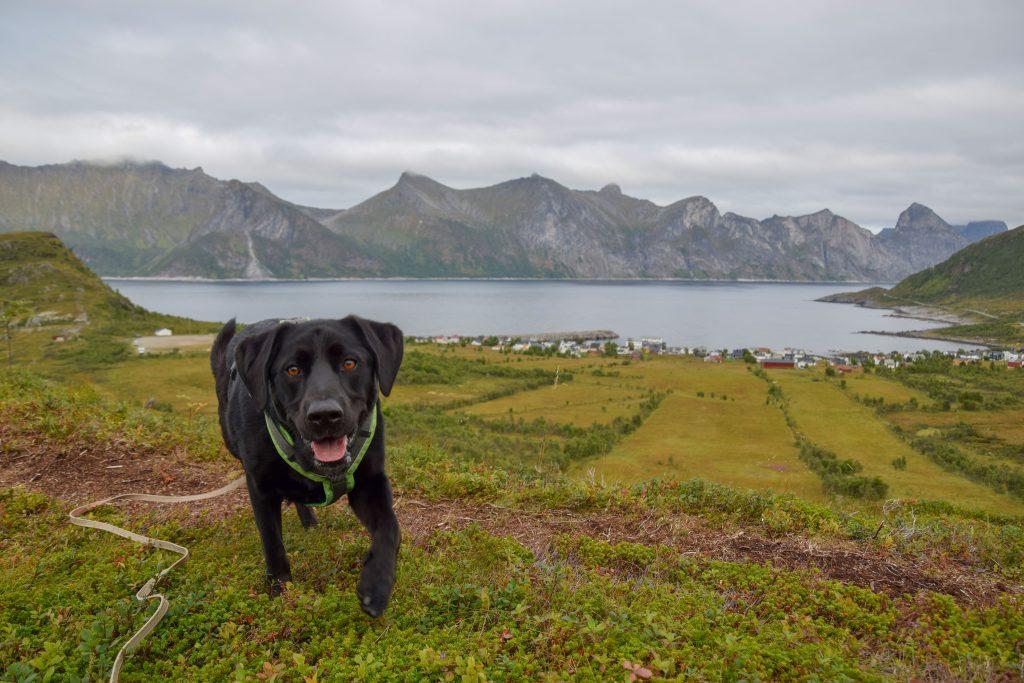 Senja Landschaft mit Hund