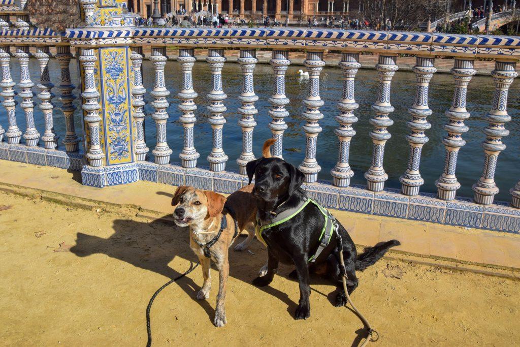 Sevilla mit Hund