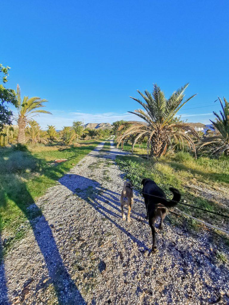 Spanien mit Hund