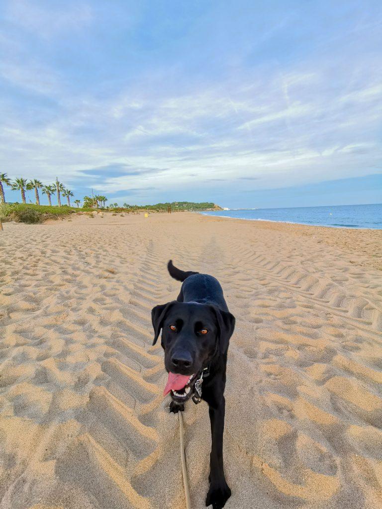 Spanien mit Hund am Strand