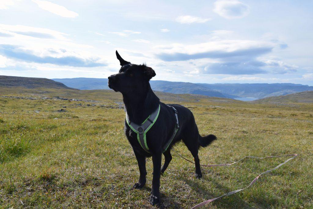 Spaziergang am Nordkap