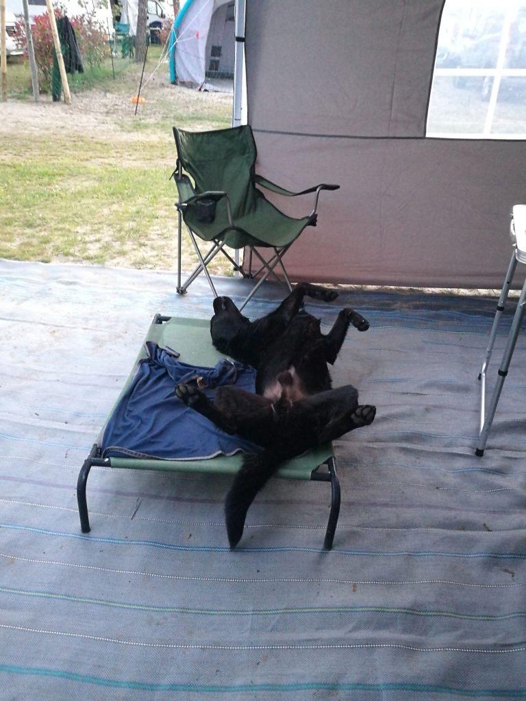 Stellplatz Dog Camp Union Lido