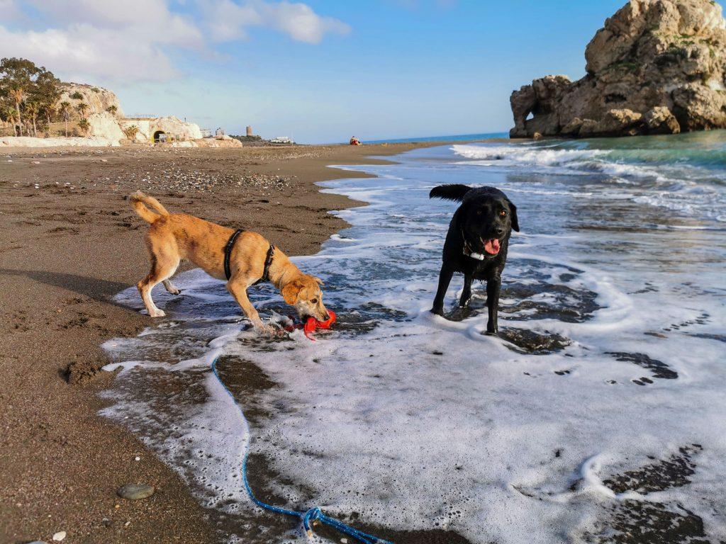Strand in Malaga mit Hund
