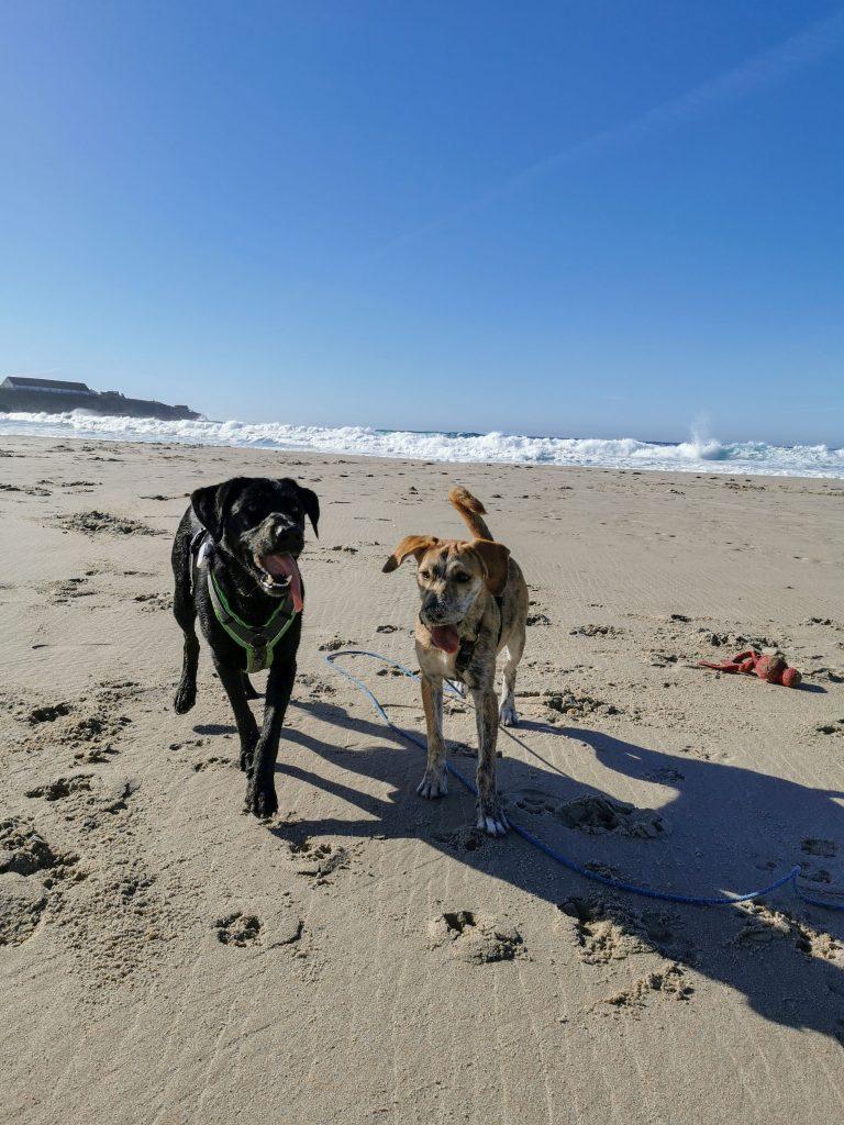 Strand in Tarifa mit Hund