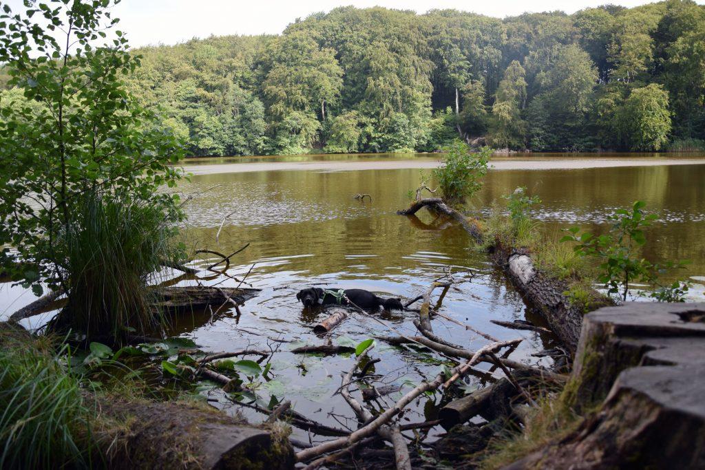 Teich auf Rügen mit Hund