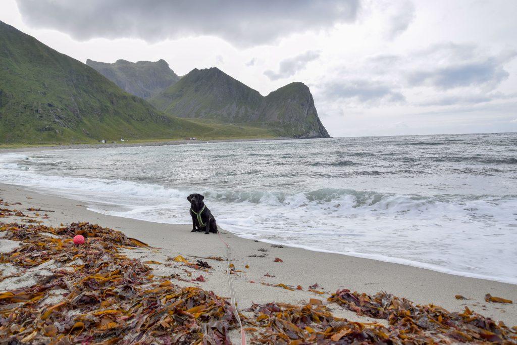 Unstad Strand Lofoten mit Hund