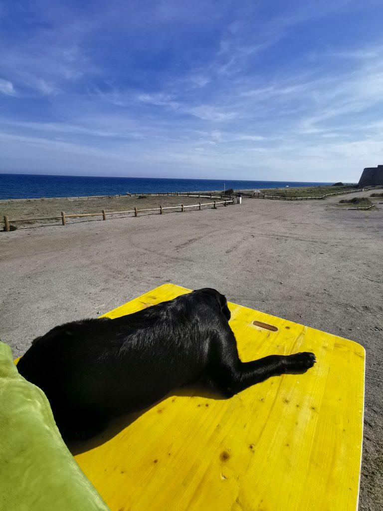 Van mit Hund in Spanien