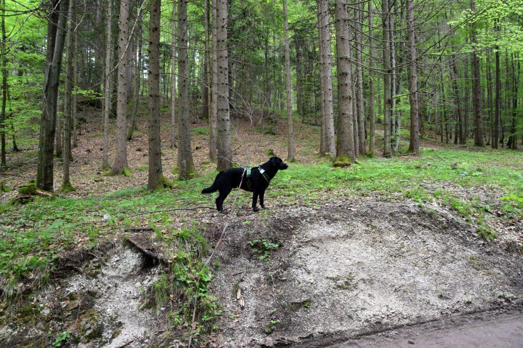 Wald am Fuschlsee