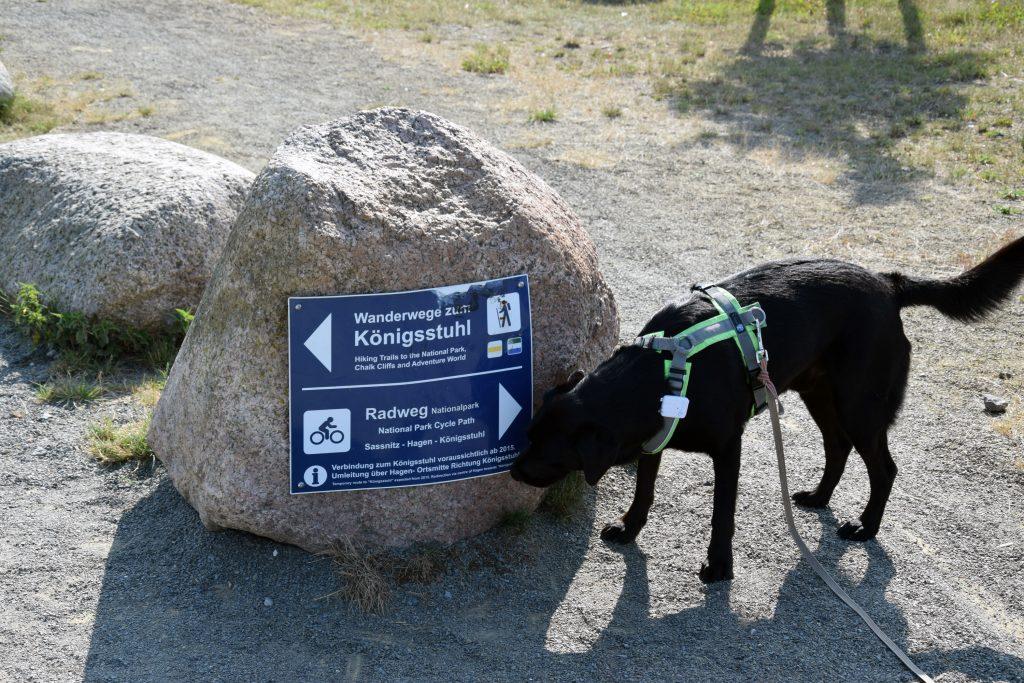Wandern mit Hund auf Rügen