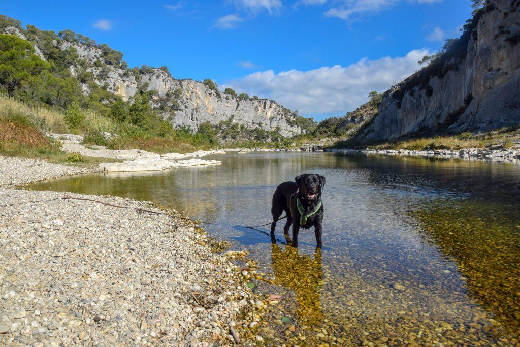 Wandern mit Hund in Frankreich