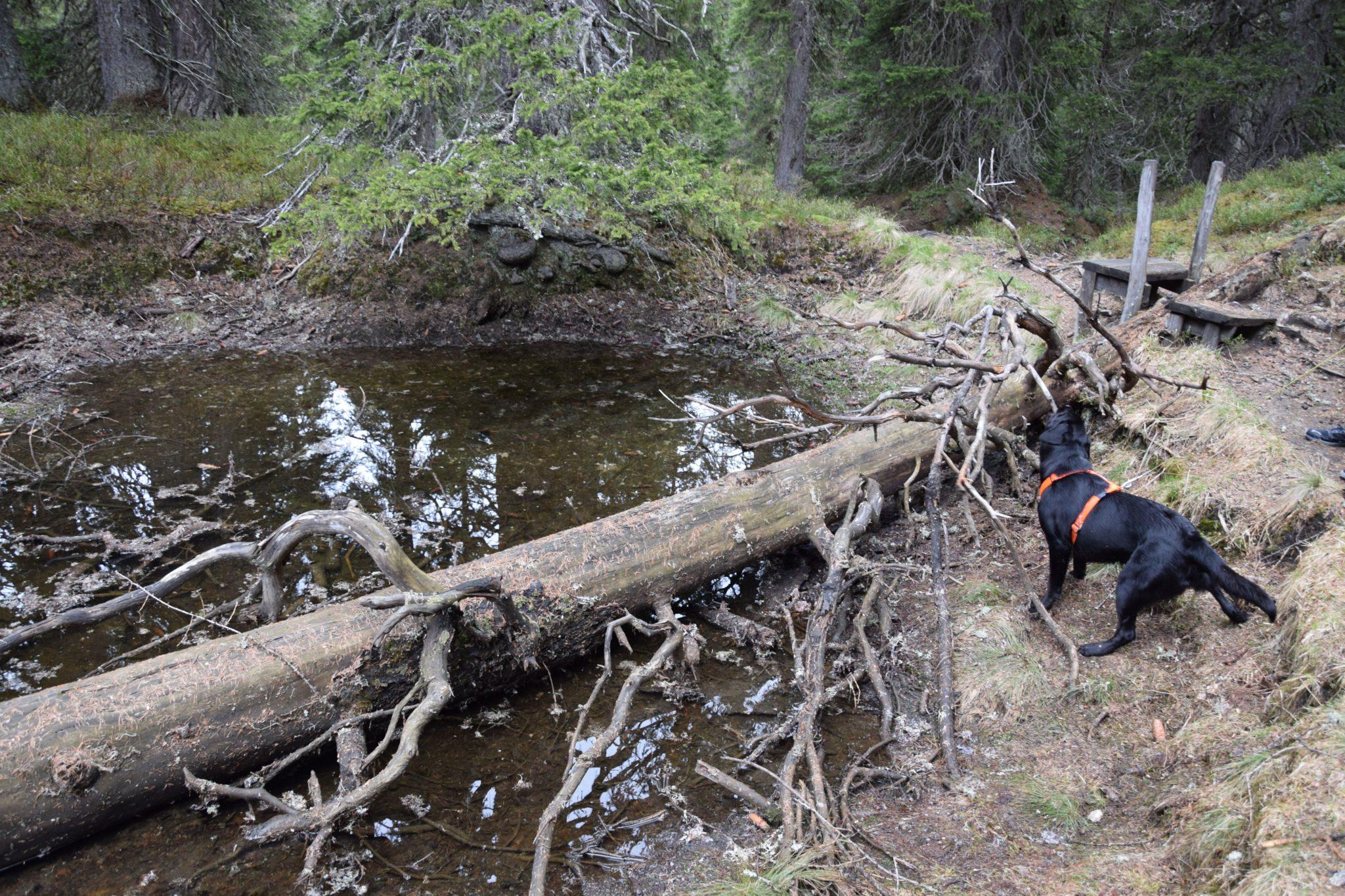 Wanderung Sumpf