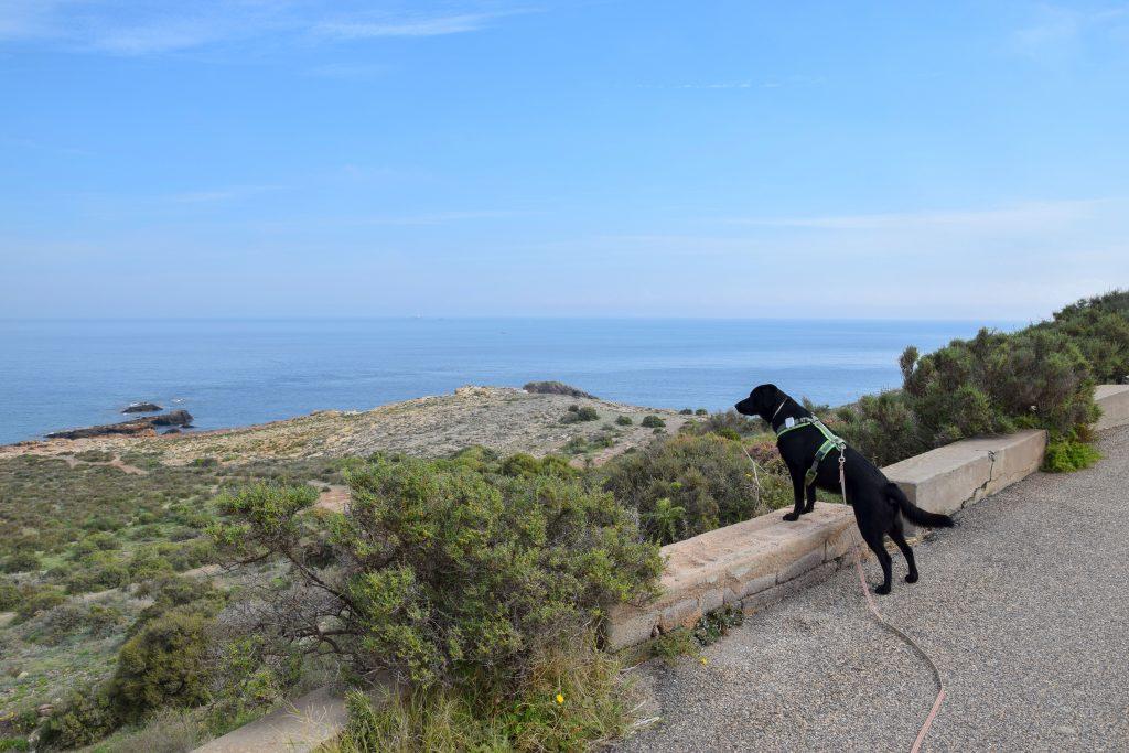 Wanderung in Spanien mit Hund