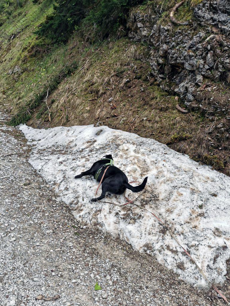 Wanderung mit Hund zur Bleckwand