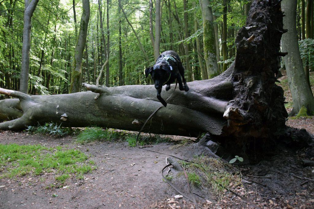 Wanderung zu den Kreidefelsen mit Hund