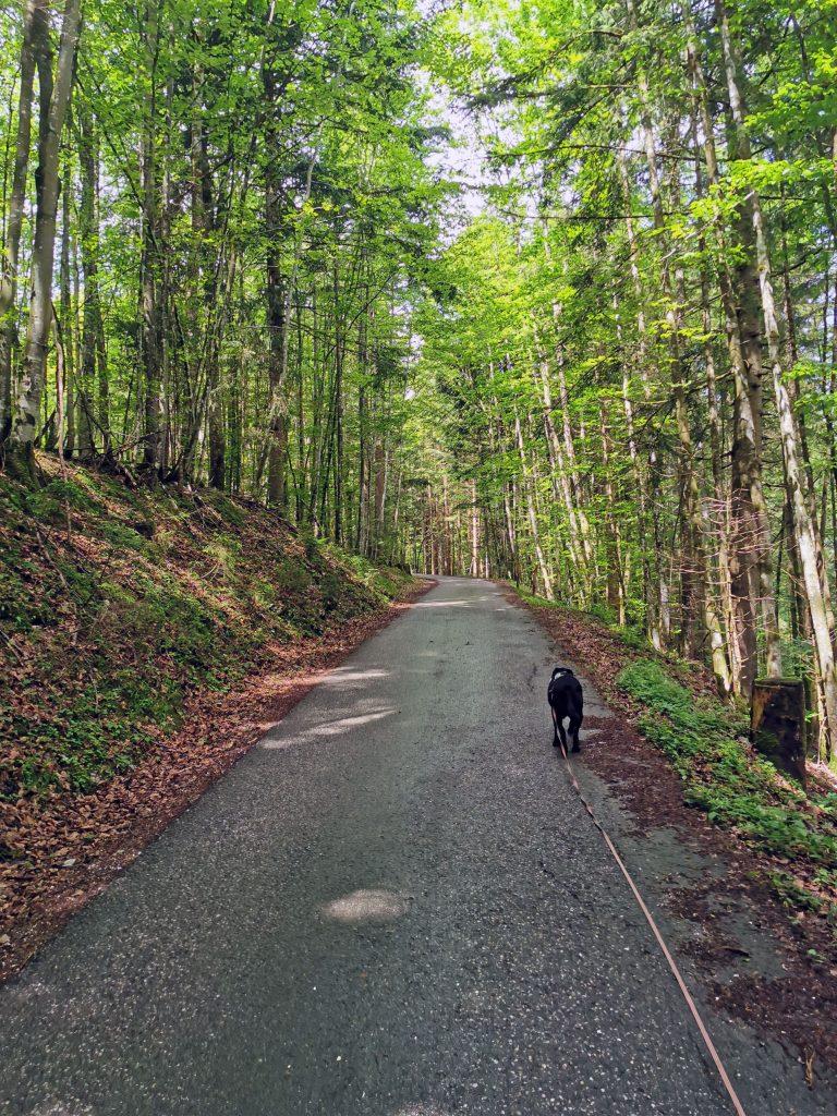 Wanderung zur Bleckwand