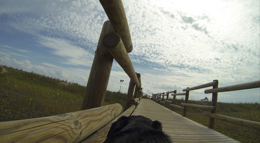 Weg zum Hundestrand Dog Camp Union Lido