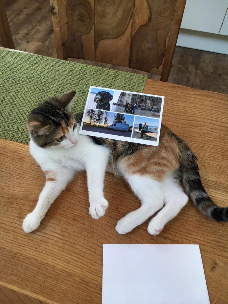 Grußkarte mit Katze