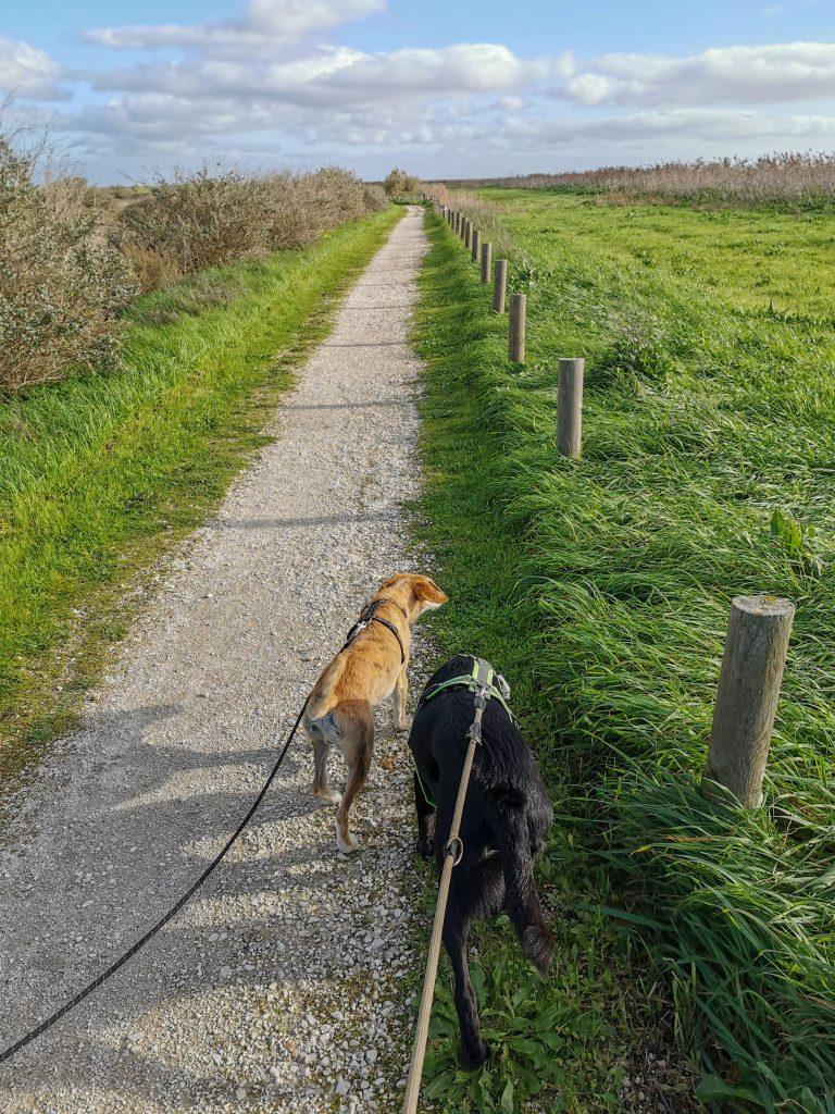 alleine campen mit Hunden