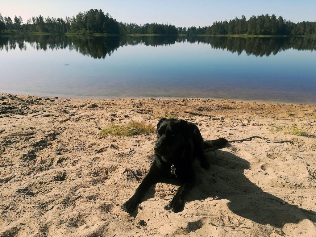 mit Hund am See in Schweden