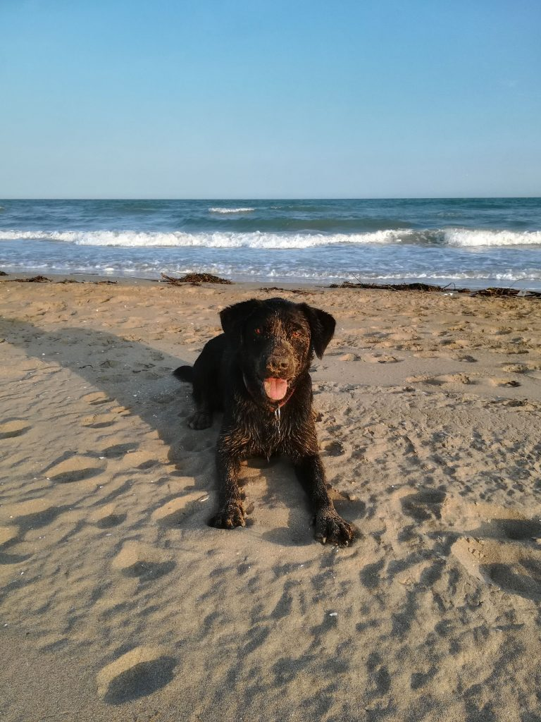 sandiger Hund am Hundestrand