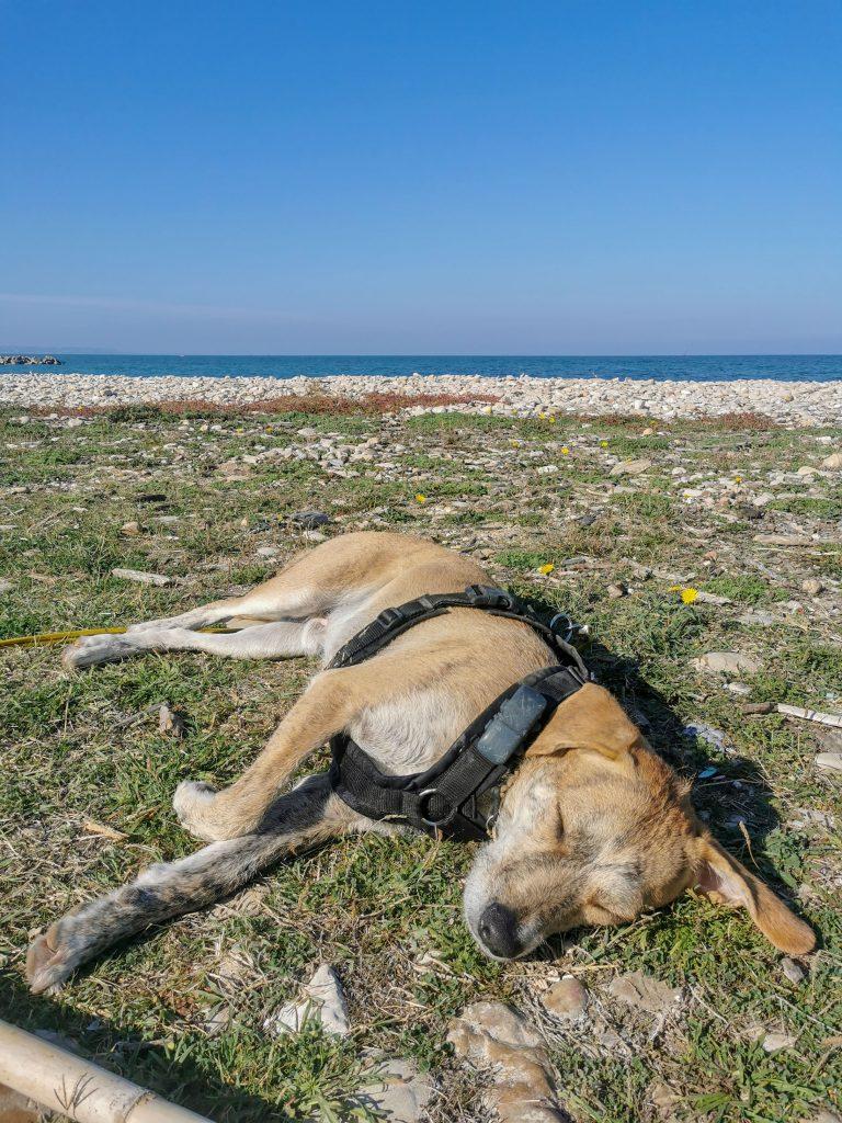 schlafender Hund am Meer
