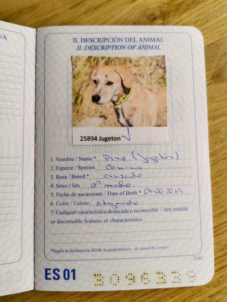 spanischen Hund adoptieren